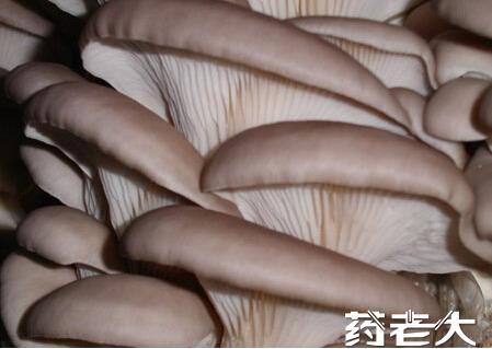 平菇提取物